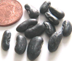 Retail vegetable cylinder beans seeds, UK, 英国零售绿缸豆种子